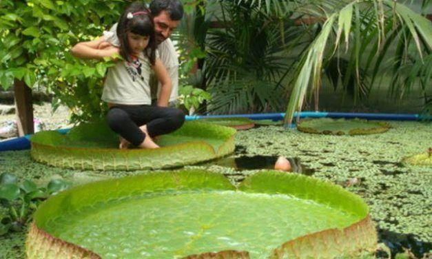 Fundación Sales, el jardín botánico de Vigo