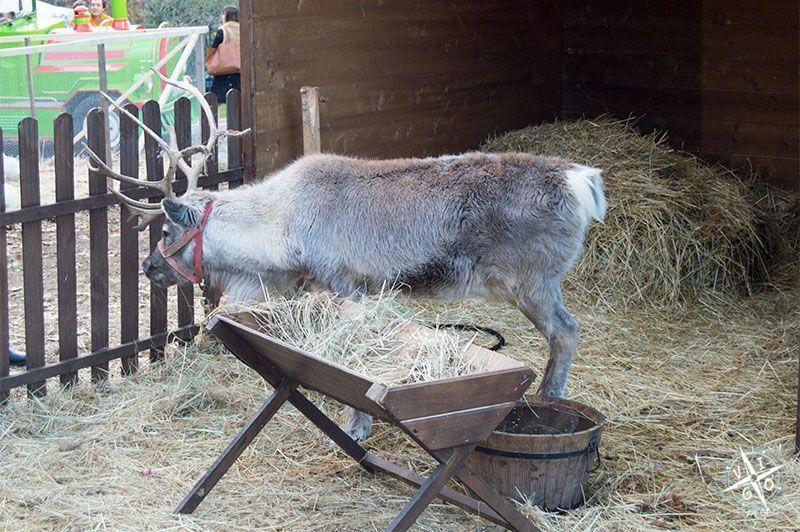 El reno de Pai Natal
