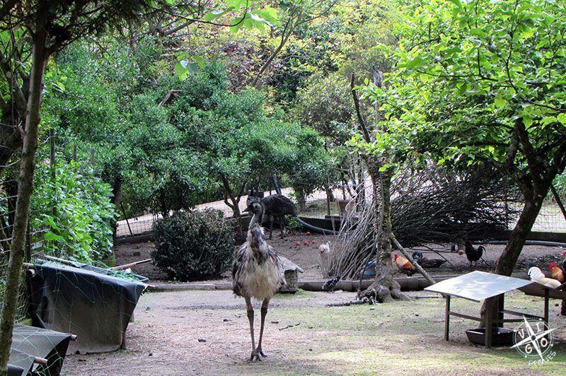 Avestruz y otros animales en el Lago dos cisnes