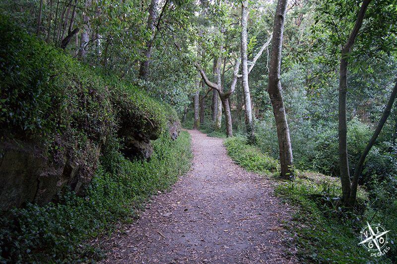 paseo por el bosque encantado
