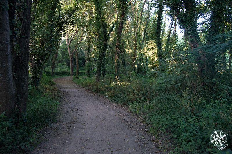 Bosque encantado, robles, castaños, laureles y abedules