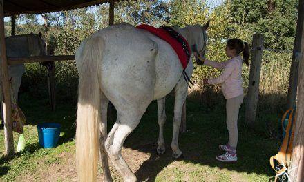 Los niños que susurran a los caballos en Cima de Vila