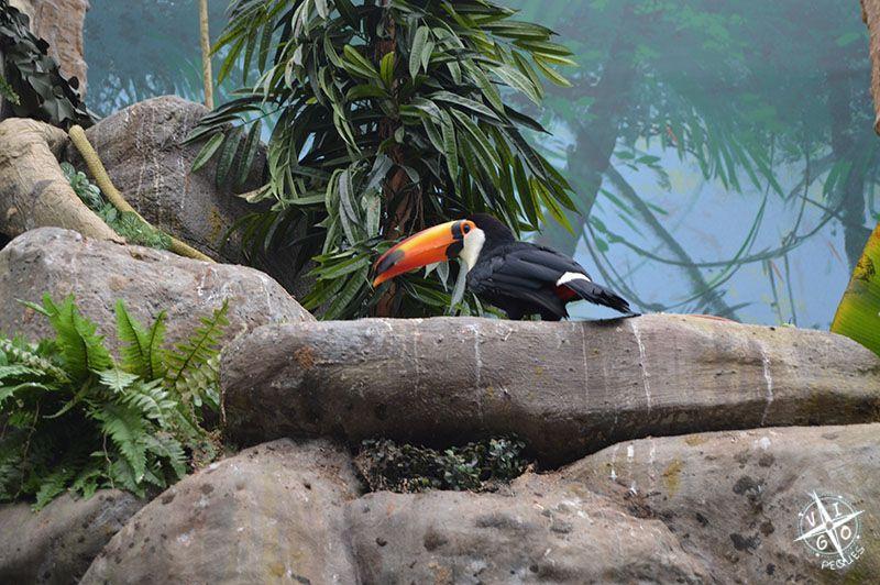 Pájaros, Worl of Discoveries, mueso de Oporto