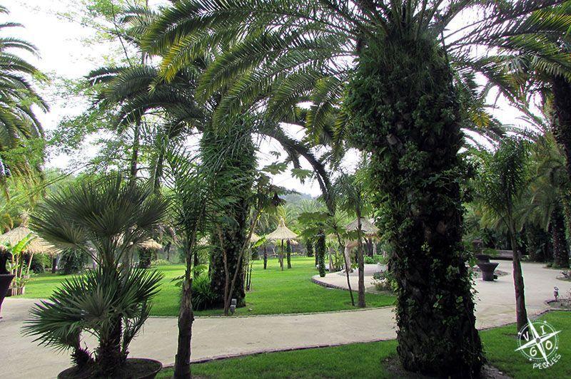 Paseo entre palmeras en el Lago dos cisnes