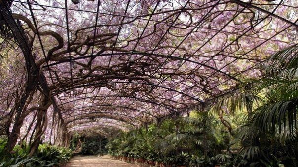 Jardin botanico de Málaga