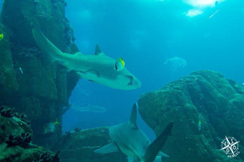 Oceanario de lisboa y telef rico vigopeques for Acuarios zona norte