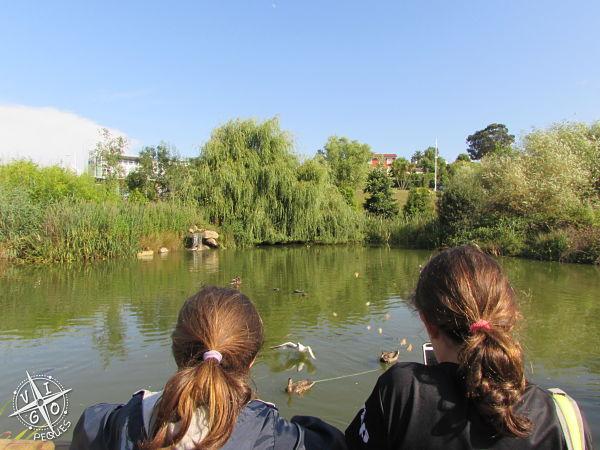 zona del parque y el estanque