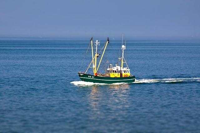 Vigo pesqueiro ofrece visitas y rutas gratuitas por el Vigo SeaFest