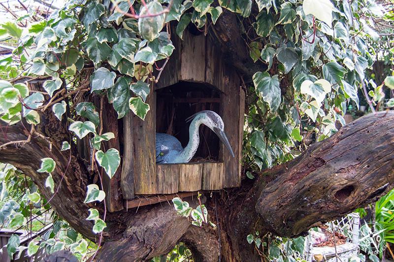 pájaro en el árbol de Lar de Morar