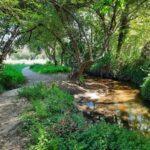 Sendero del río Muiños: ruta fácil para hacer con niños